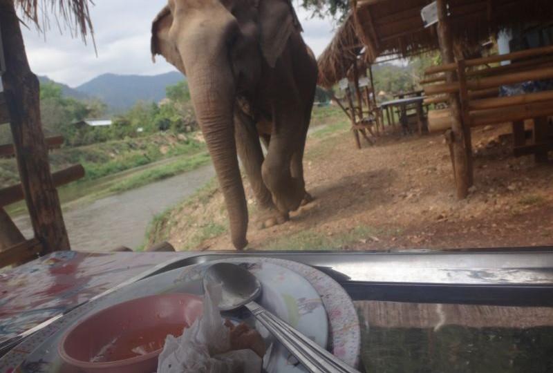 elefant beim Mittagessen