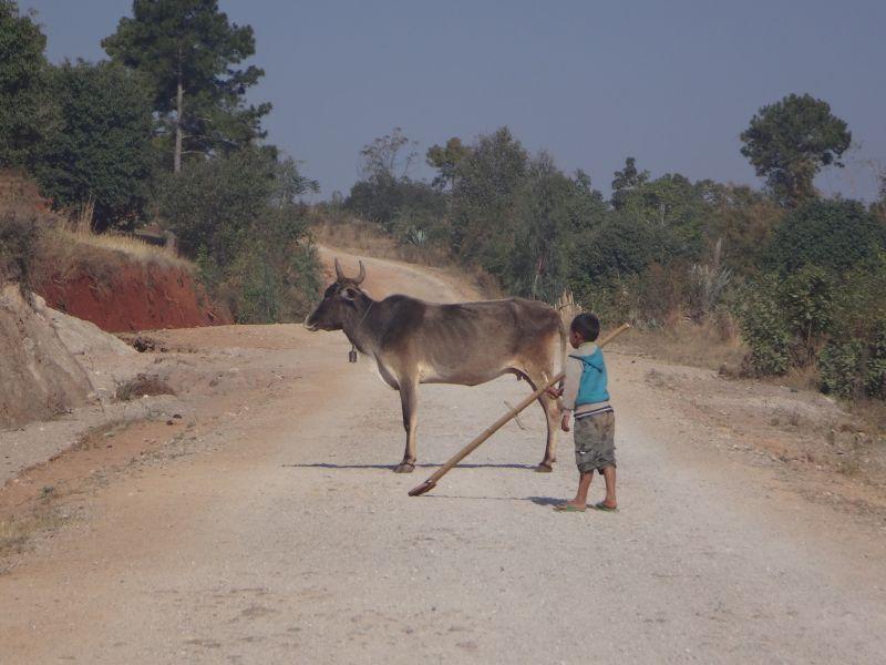 die Kuh lässt sich nichts sagen